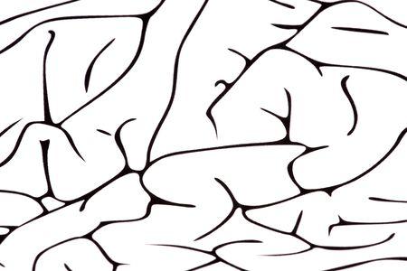 Brain on white background photo