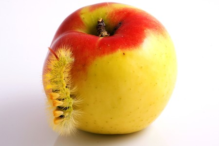 Macro caterpillar and apple on white background photo