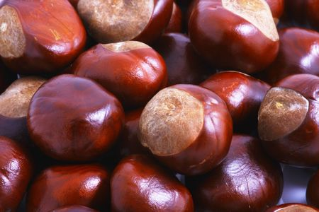 Horse chestnut on a white background photo