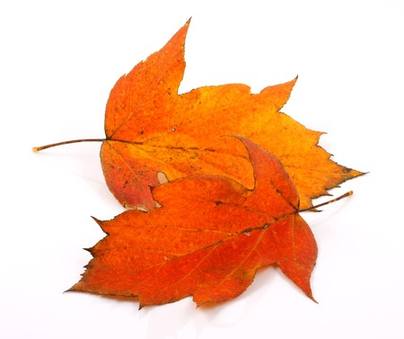 changing seasons: Brilliant color in details of fall leaves turned for autumn season