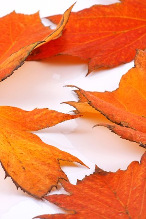 Brilliant color in details of fall leaves turned for autumn season Stock Photo - 8044174