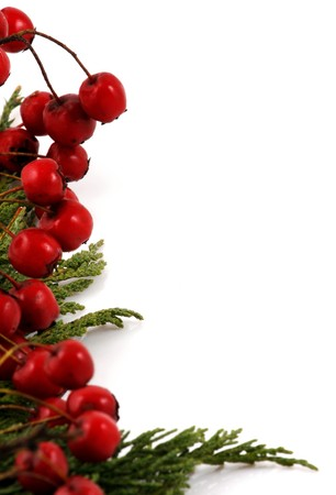 Branch with red berries, isolated on white photo