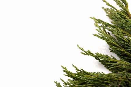 Christmas background - branch isolated on white
