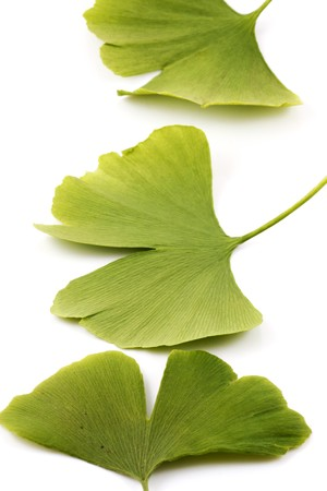 Ginkgo biloba on white background photo
