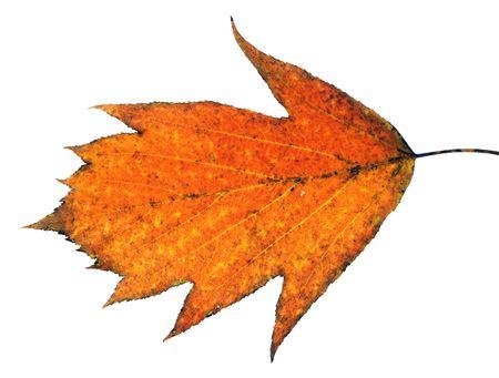Beautiful autumn leaf close-up photo