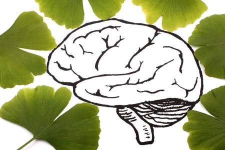 ginkgo leaf: Ginkgo biloba on brain background