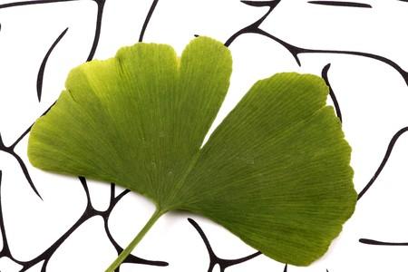 Ginkgo biloba on brain background photo