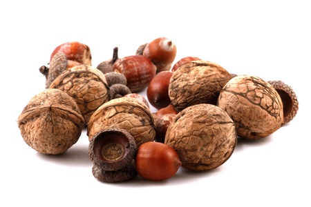 Color photo of acorns and walnuts on white background photo