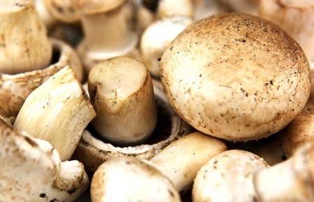 Fresh mushrooms Stock Photo - 8742179