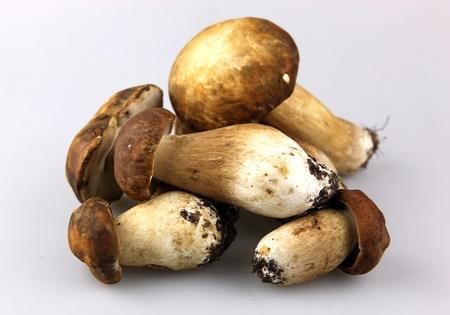 porcini: Mushrooms - Porcini, Boletus edulis Stock Photo