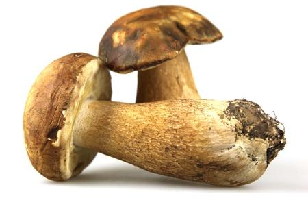 Mushrooms - Porcini, Boletus edulis Stock Photo