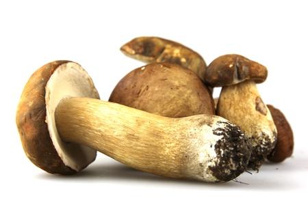 Mushrooms - Porcini, Boletus edulis photo