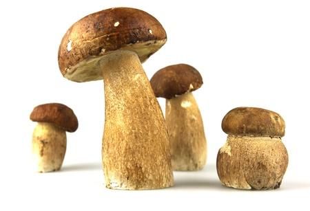 oyster plant: Mushrooms - Porcini, Boletus edulis Stock Photo
