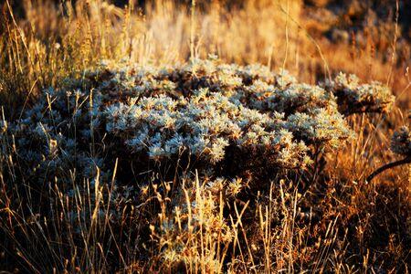 park nature landscape photo