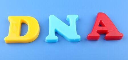 nucleotides: ADN