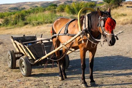 carreta madera: Caballo con un carro Foto de archivo