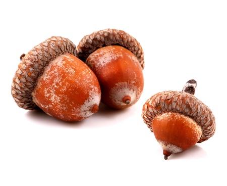 Acorn on a white background photo