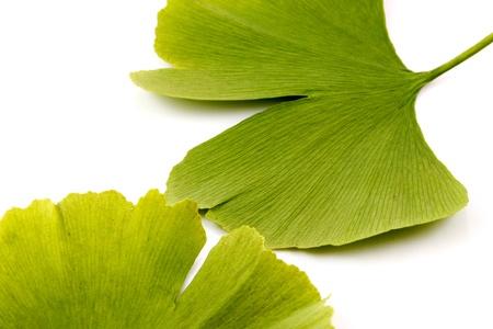 Ginkgo biloba on white background photo