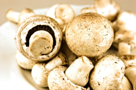 An edible mushroom, especially the much cultivated species Agaricus bisporus photo