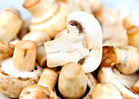 Edible mushroom Stock Photo - 12814990