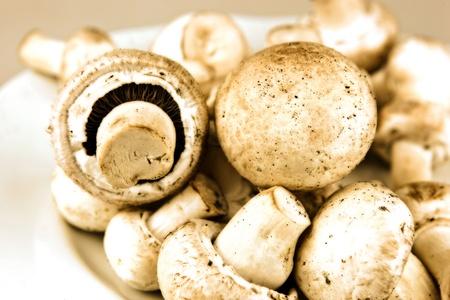 Edible mushroom Stock Photo - 12815008