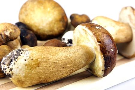 edulis: Mushrooms - Porcini, Boletus edulis Stock Photo