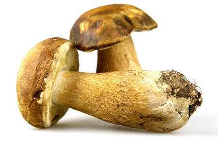 Mushrooms - Porcini, Boletus edulis Stock Photo - 13060830