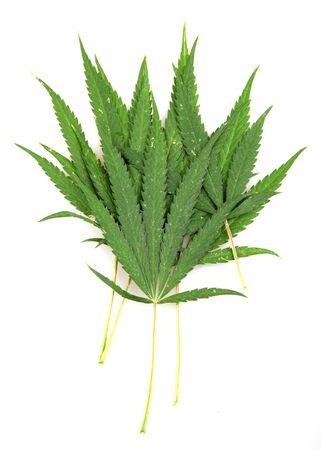 Cannabis. Stock Photo - 14897540