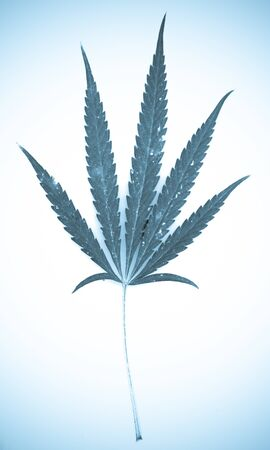 Marijuana. Stock Photo - 15209657