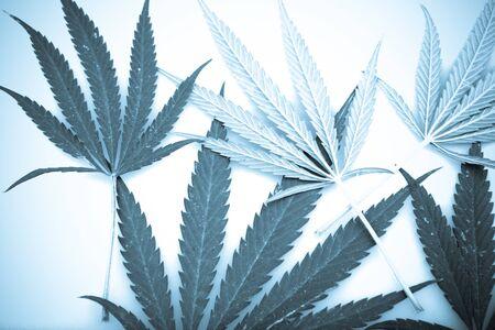 Marijuana. Stock Photo - 15210002