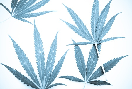 Marijuana. Stock Photo - 15209998
