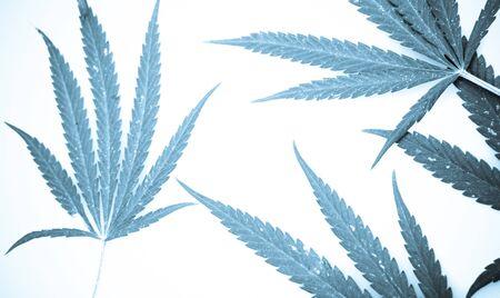 Marijuana. Stock Photo - 15209671