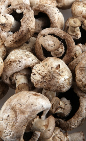 mushroom champignons. photo