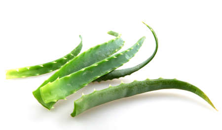 aloe vera leaves on white background photo