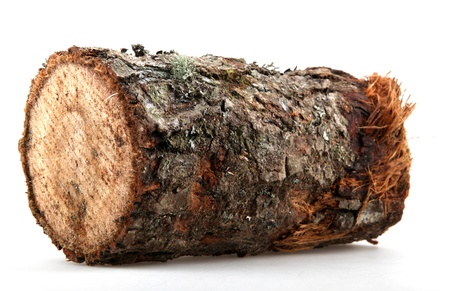 The logs of fire wood isolated on white.