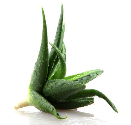 Aloe vera plant isolated on white. photo