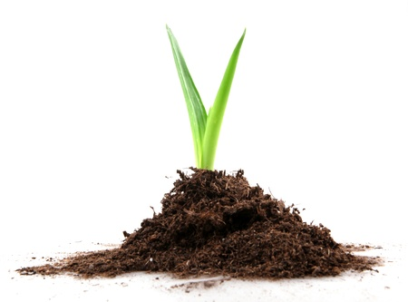 welfare plant: Eco concept Stock Photo