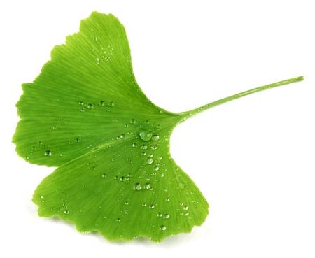 イチョウ葉 写真素材