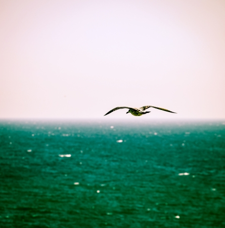 White Sea Gull photo