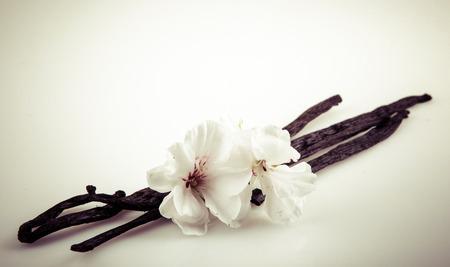 バニラの実と花 写真素材