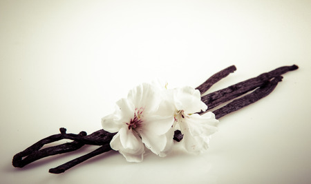 indian bean: Vanilla Bean And Flower