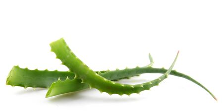 Aloe Vera Plant Isolated On White photo