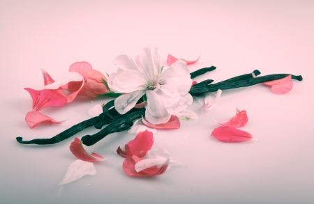 Vanilla Bean And Flower photo