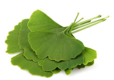 ginkgo biloba leaves isolated on white background Standard-Bild