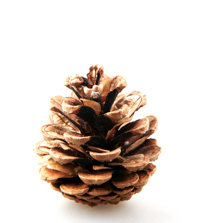Large Natural Pine Cone Isolated On White Background