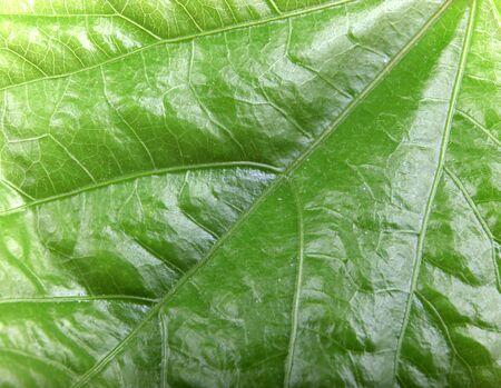 Green Leaf Background. Stock Photos. Stockfoto