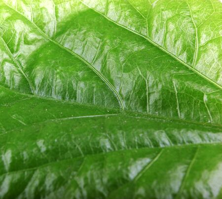 Green Leaf Background. Stock Photos. 写真素材
