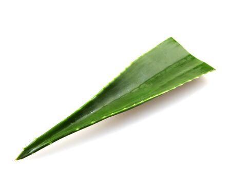 Aloe Vera Leaf On White Background