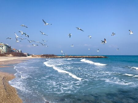 A Flock Of Seabirds Fly Over The Blue Sea.