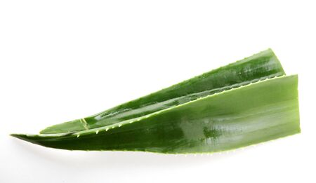 Aloe vera plant isolated on white background.